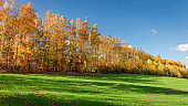 Stunning forest and green field in the sunny autumn, Poland