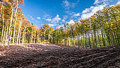 Sunny autumn in the forest and field, Poland