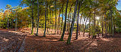 Panorama of beautiful forest in the autumn, Poland