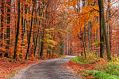 Amazing and brown forest in the fall, Poland