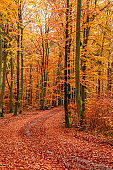 Brown forest in the late autumn, Poland