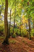 Sun beam in wonderful forest in the fall, Europe
