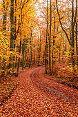 Colorful and breathtaking forest in the autumn in Poland