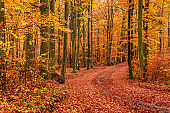 Brown and green path in autumn forest, Europe