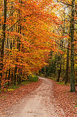 Wonderful and brown path in the autumn forest, Europe