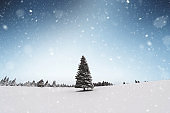 Snow Storm Over Perfect Christmas Tree