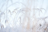 Frost covered grasses in winter landscape