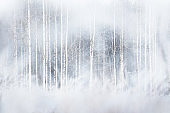 Winter forest with snowy birch trees