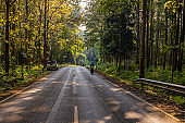 The road, Forest and the morning light