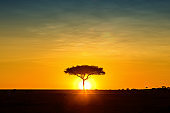 Silhouette African Sun Behind Tree