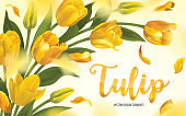 Blooming beautiful yellow with white tulip flowers background template.