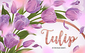 Blooming beautiful purple tulip flowers background template.