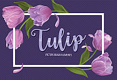 Blooming beautiful purple tulip flowers on violet background template.