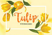 Blooming beautiful yellow tulip flowers background template.