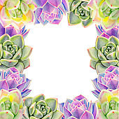 Frame composition from colorful succulents.  Decorative plants. Floral print. Marker drawing. Watercolor painting.