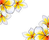 Beautiful corner frame from white plumeria flowers. Frangipani. Watercolor painting.