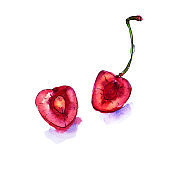 Watercolor red juicy cherries. Sketch drawing. Hand drawn food illustration.