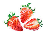 Watercolor red juicy strawberry with half berry. Summer sweet fruits and berries.
