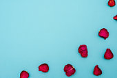 Background of maroon rose petals on blue background. The view from the top. Blank for greetings, greeting cards