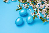 Blossom Cherry and Easter Blue Eggs on the Blue Background.