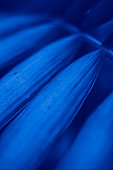 Abstract blue floral blurred background. Tropical palm leave backdrop