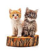 Kittens on the stump.