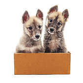 Puppies in the box.
