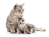 Cat and two kittens.
