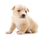 One little puppy.