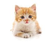 Beautiful red kitten.
