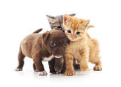 Kittens and puppy.