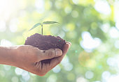 Man hand holding the tree is grown on a green background nature / care ideas and protect the environment.