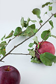 Red organic apples with leaves