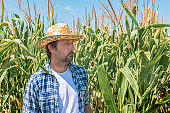 Portrait of handsome corn farmer in cultivated maize field
