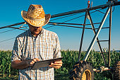 Serious concerned farmer using tablet computer in cornfield