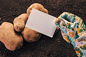 Organic potato farmer holding blank business card mock up