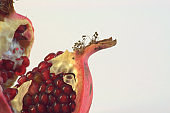 The ripe fruit of the pomegranate is cut and showing its own grains. Photo taken on white background.