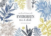 evergreen plants collection