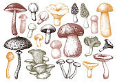 Mushrooms collection color