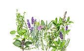 Fresh herbs Basil rosemary sage thyme mint dill lavender