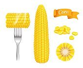 Corn realistic. Harvest fresh cut grains eating corn vector template