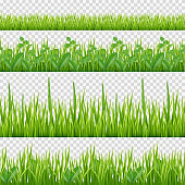 Grass herbs pattern. Nature symbols leaves and herbs horizontal vector seamless background