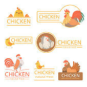 Pollo logo. Chicken illustrations for farm identity organic food meat of bird advertizing vector template