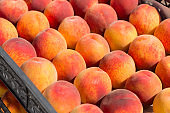 a lot of red ripe peaches lie in rows in boxes, a new crop of peaches, a concept