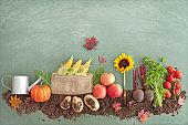 Autumn organic food garden
