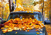 Old red leaves on dark car under golden maple trees in sunny autumn