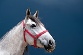 White horse with blue background
