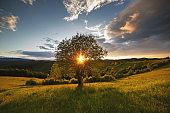 Summer green hills in Transylvania