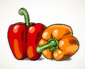 Sweet peppers vegetable illustration