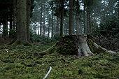 Tree stump on mossy forest floor
